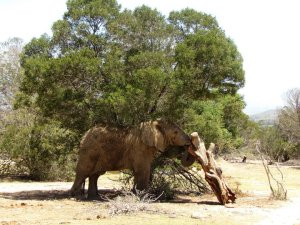 This elephant was playing with the log- using his trunk to toss it up and roll it around