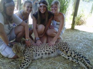 Save the Cheetahs!