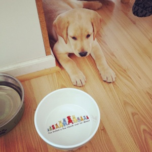 Is it dinner time yet? Meet Macy- my brothers new 8 week old yellow lab