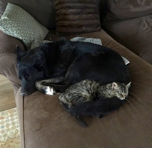 Noah & Pisco. 90 lb Doggie, 4 lb kitty Love.