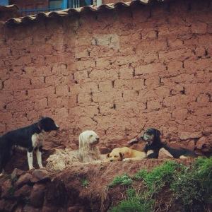 Doggies of Peru