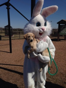 Macy Meets the Easter Bunny!