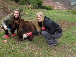 Meeting Donkeys in Peru